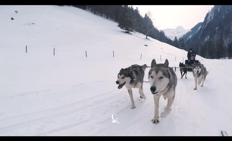 Attelage de chiens de traîneaux